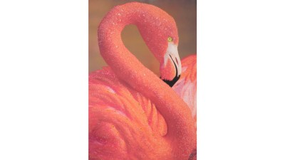 Tablou Mauro Ferretti Flamingo - 80x120 cm